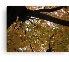 Fall 2013 3 Canvas Print