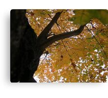 Fall 2013 4 Canvas Print