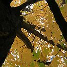 Fall 2013 5 by dge357