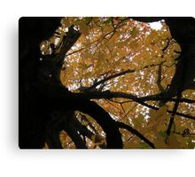 Fall 2013 6 Canvas Print