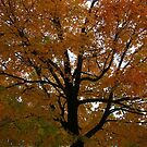 Fall 2013 7 by dge357