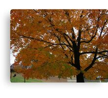 Fall 2013 8 Canvas Print