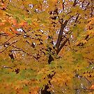 Fall 2013 10 by dge357