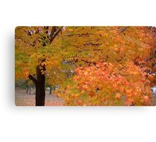 Fall 2013 12 Canvas Print