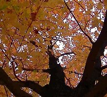 Fall 2013 17 by dge357