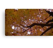 Fall 2013 19 Canvas Print
