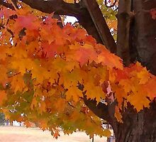 Fall 2013 25 by dge357