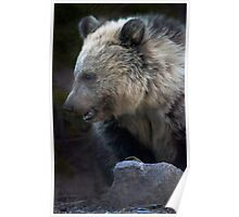Grizzly Bear Cub-Signed-#3632 Poster