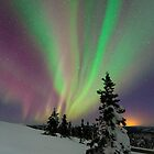 Aurora Borealis by David Campbell