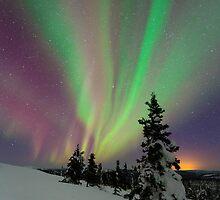 Aurora Borealis by David Campbell
