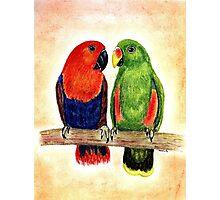 Eclectus Parrots Photographic Print