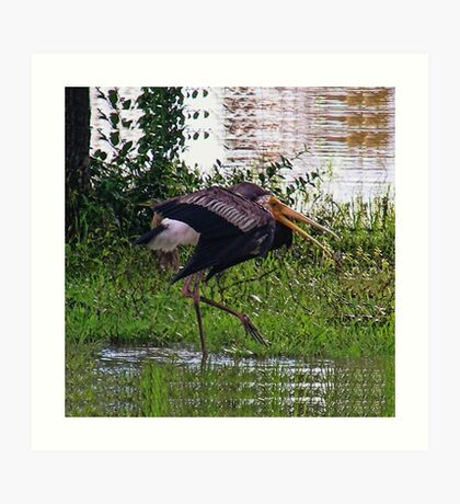 MALE STORK BIRD..TRYING TO ATTRACT FEMALE..BREEDING SEASON... VERSION TWO VARIOUS APPAREL-JOURNAL,PILLOW,TOTE BAGS ,GRAPHIC TEE SHIRTS,ECT.. Art Print