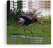 MALE STORK BIRD..TRYING TO ATTRACT FEMALE..BREEDING SEASON... VERSION TWO VARIOUS APPAREL-JOURNAL,PILLOW,TOTE BAGS ,GRAPHIC TEE SHIRTS,ECT.. Canvas Print