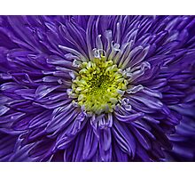 purple explosion Photographic Print