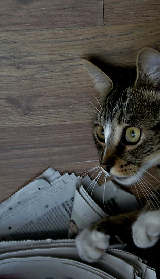 Iz my turn for papers  by Ladymoose