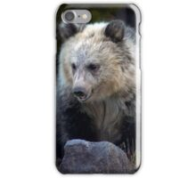 Grizzly Bear Cub-Signed-#3692 iPhone Case/Skin
