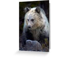 Grizzly Bear Cub-Signed-#3692 Greeting Card