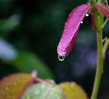 Raindrop by fodorpetya