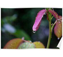 Raindrop Poster