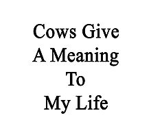 Cows Give A Meaning To My Life  Photographic Print
