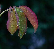 Drops by fodorpetya