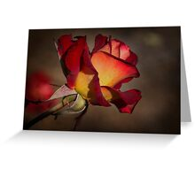 Variegated Rose with Morning Dew Greeting Card
