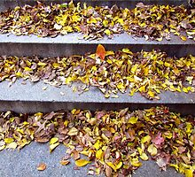 Autumn Steps by Alberto  DeJesus