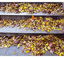 Autumn Steps Photographic Print