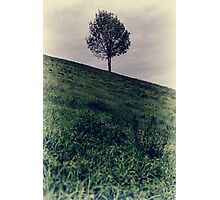 Isolated green fine art tree Photographic Print