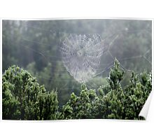 A Beautiful Spider's Web Poster