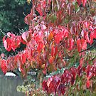 Red Leaves In The Rain by WeeZie