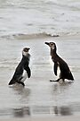 Magellanic Penguin Juveniles by Carole-Anne