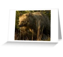 Grizzly Bear Cub-Signed-#4909 Greeting Card