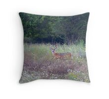 Buck in the Meadow - White tailed deer buck Throw Pillow