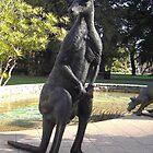 Kangaroo by lezvee