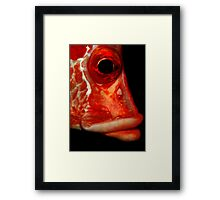 Giant squirrelfish Framed Print