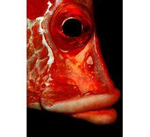 Giant squirrelfish Photographic Print