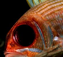 Squirrelfish by MikMoxter