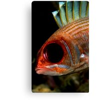 Squirrelfish Canvas Print