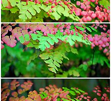 Miniature Forest Collage by tropicalsamuelv