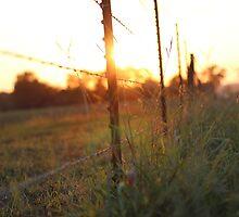 That golden evening <3 by AbigailJoy
