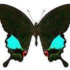 Butterfly species Papilio Karna Karna by paulrommer