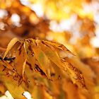 Golden Leaves by AbigailJoy