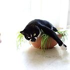 Cat in the grass by wsellers