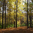 Autumn Color - Houston Woods Ohio by Tony Wilder