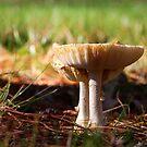 Mushroom - Fall Houston Woods Ohio by Tony Wilder