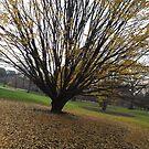Late Autumn Colors, New York Botanical Garden, Bronx, New York by lenspiro