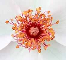 Beautiful flower closeup by Daniele Zighetti