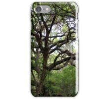 Live Oak Lane iPhone Case/Skin