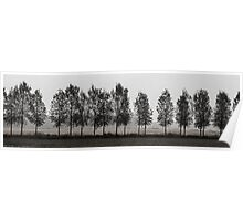 Row of trees in a gloomy day Poster